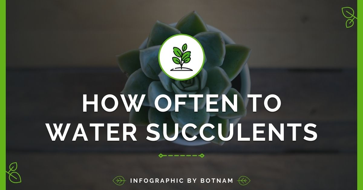 how-to-water-succulent-plants